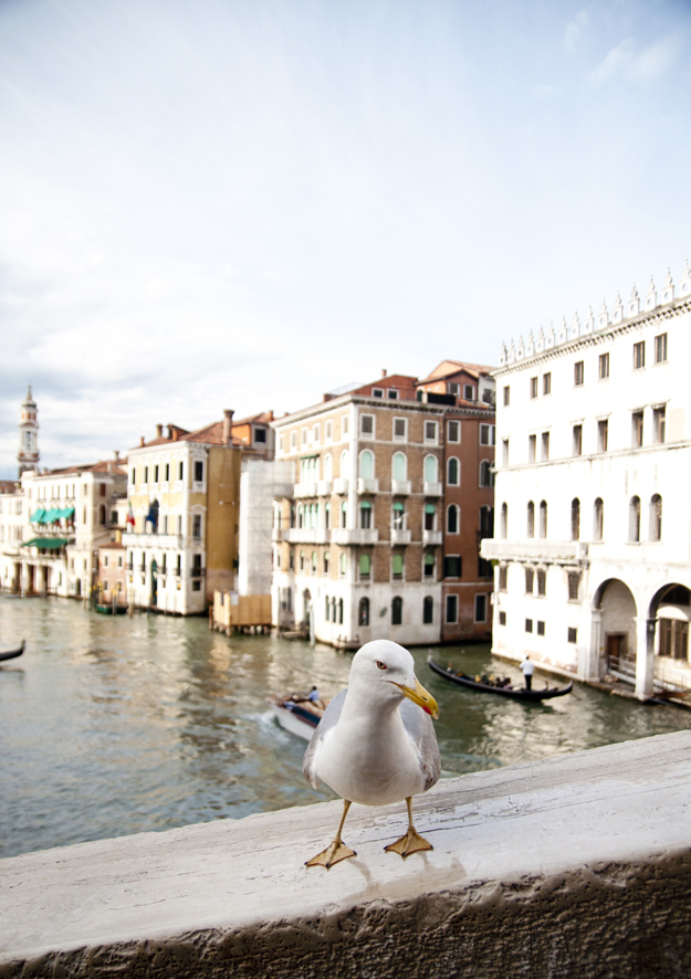Venice - Photo by: Lauren Caron