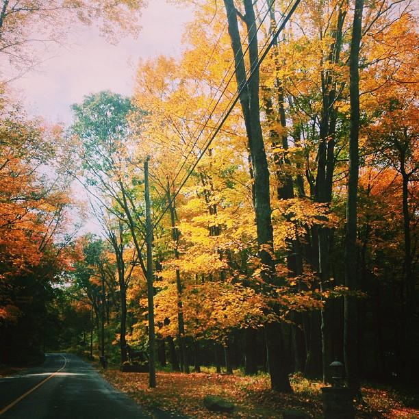 LaurenCaron©2013_Leaves