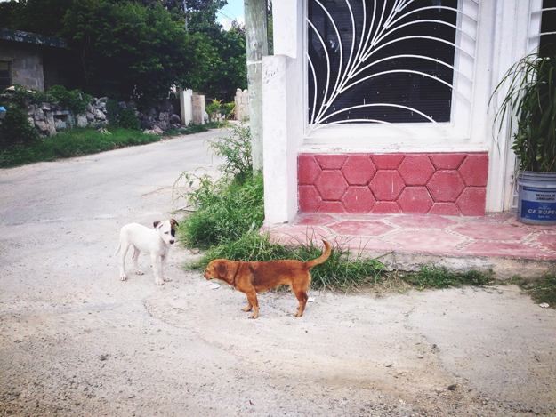 4thfloorwalkup_LCARON_Mexico_11