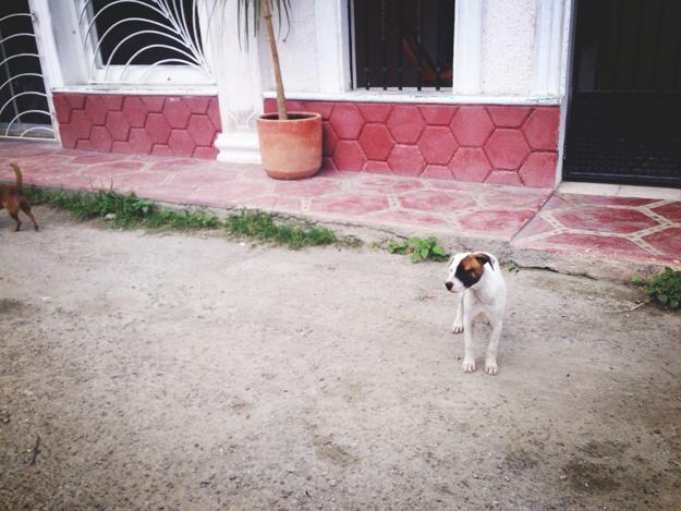 4thfloorwalkup_LCARON_Mexico_12