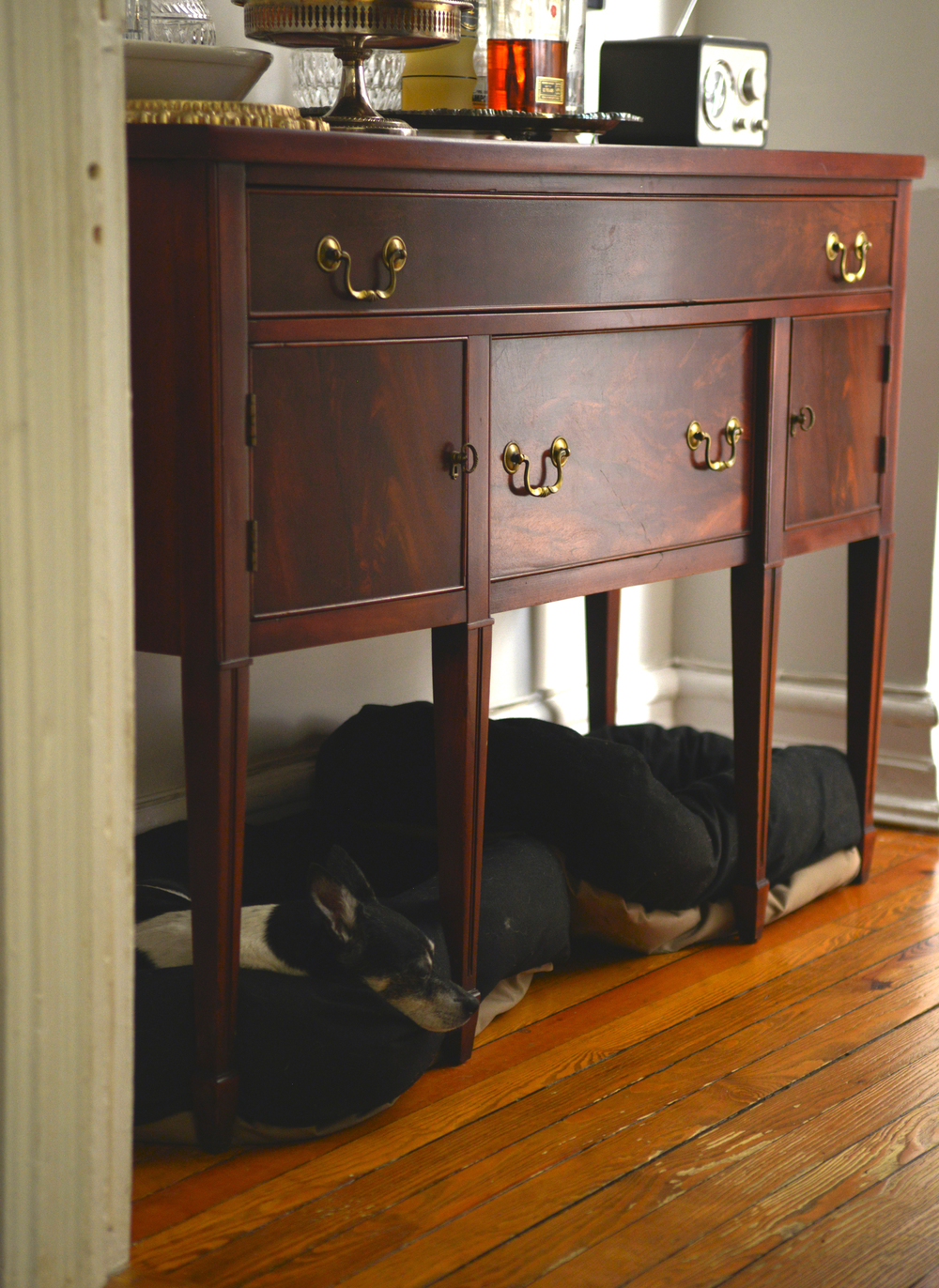 Max napping under the new sideboard. A success!  | Photograph by Lauren L Caron