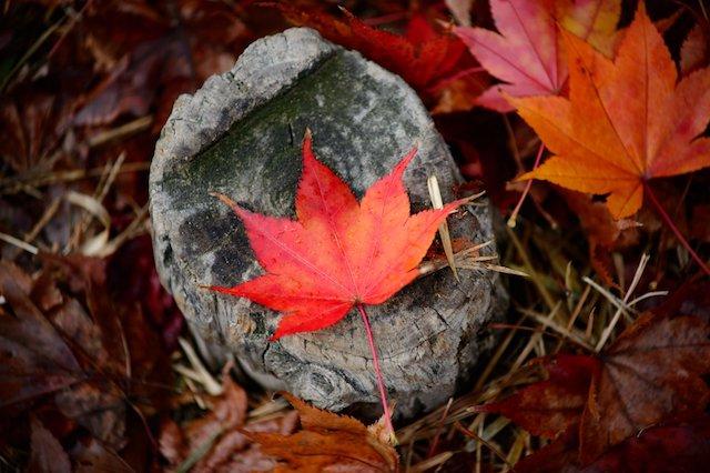 leaf_embrace_sm.jpg