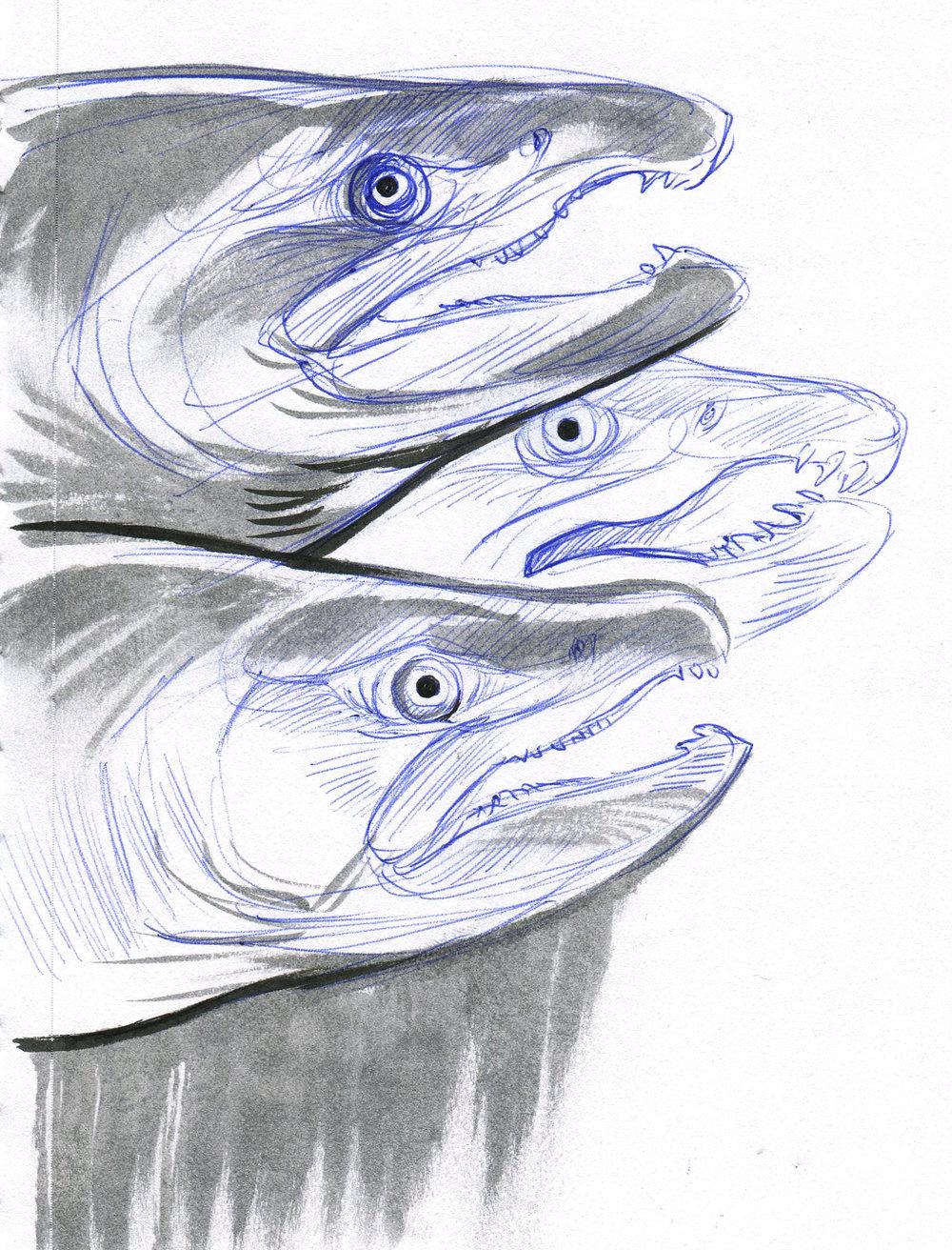 10-24-2017_fish.jpg