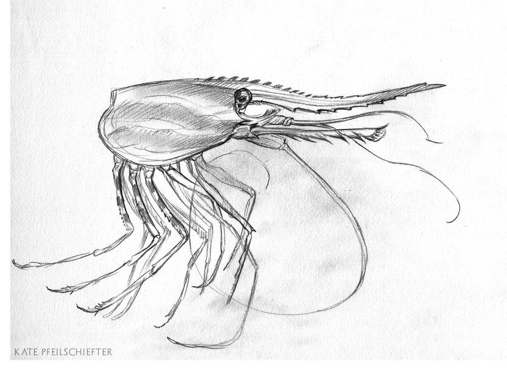 05-15-2018_shrimp.jpg