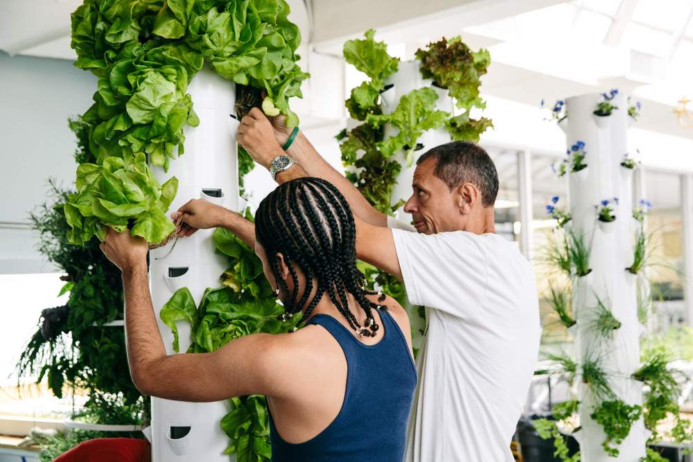 Stephen Ritz (right) and one of his students harvesting lettuce from a vertical gardening system