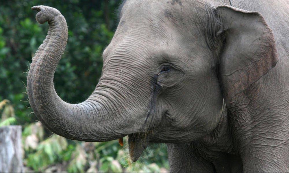 Image from  World Wildlife Fund