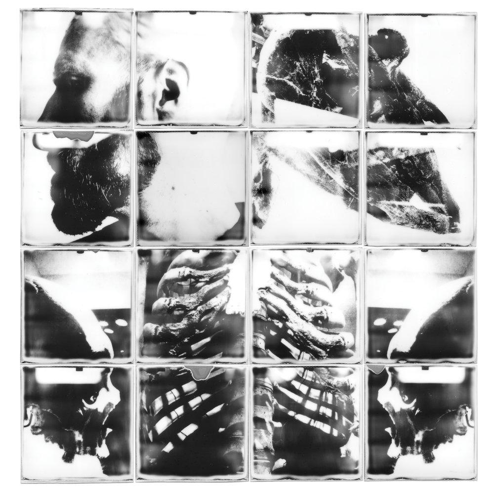 Burro-collage.jpg