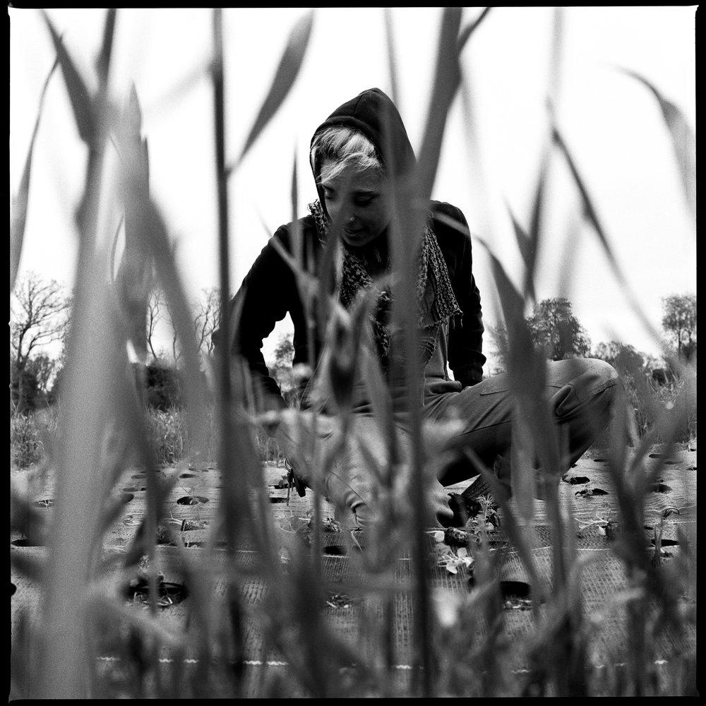Herrigate Flowers-12.jpg