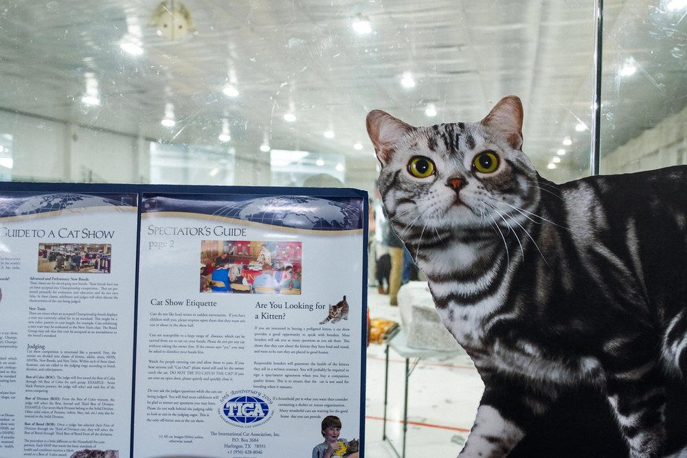 Cat Show-1.jpg