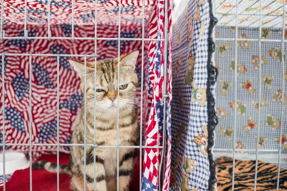 Cat Show-39.jpg