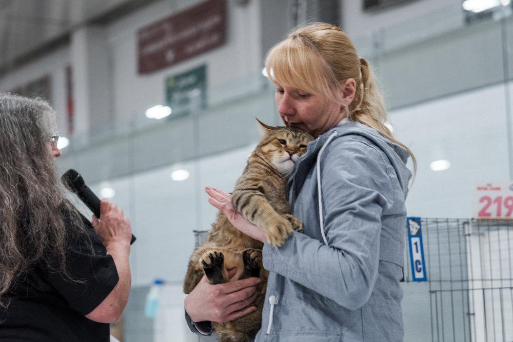 Cat Show-28.jpg
