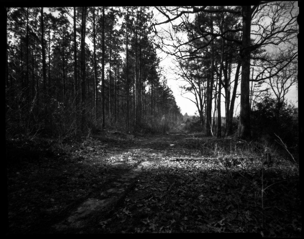 devils tramping ground-2.jpg