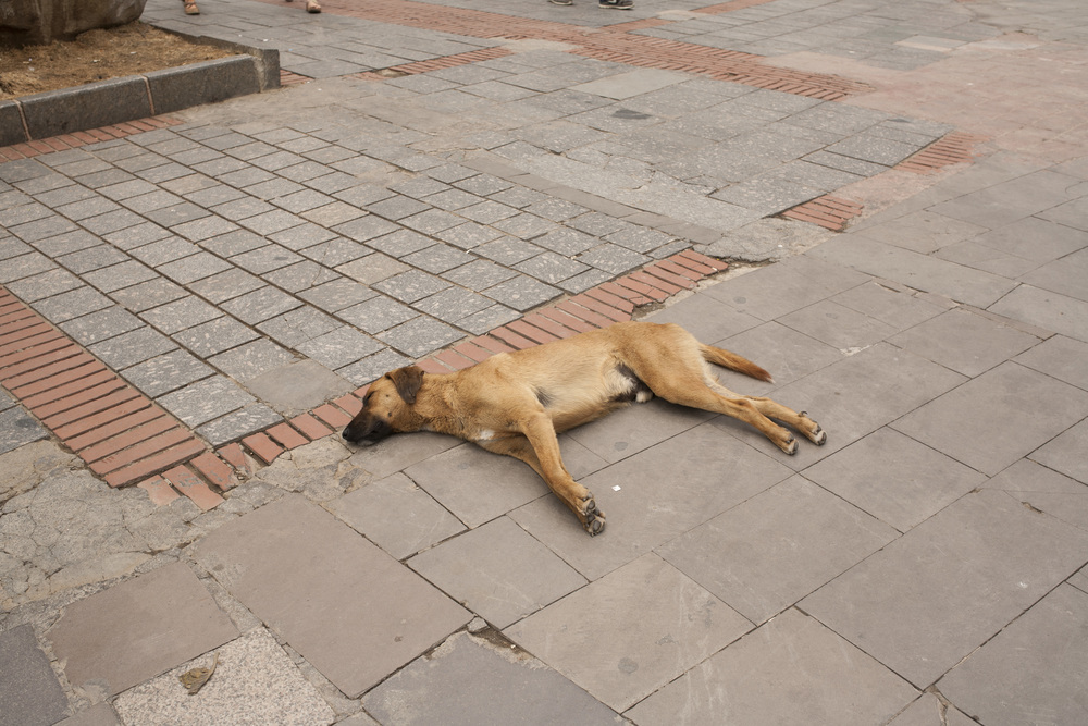 I've never seen dogs do this before. There were dogs everywhere, just lying on the ground like that, snoozing in the heat. I honestly thought this dog was dead when I saw it but nope, just chilling.