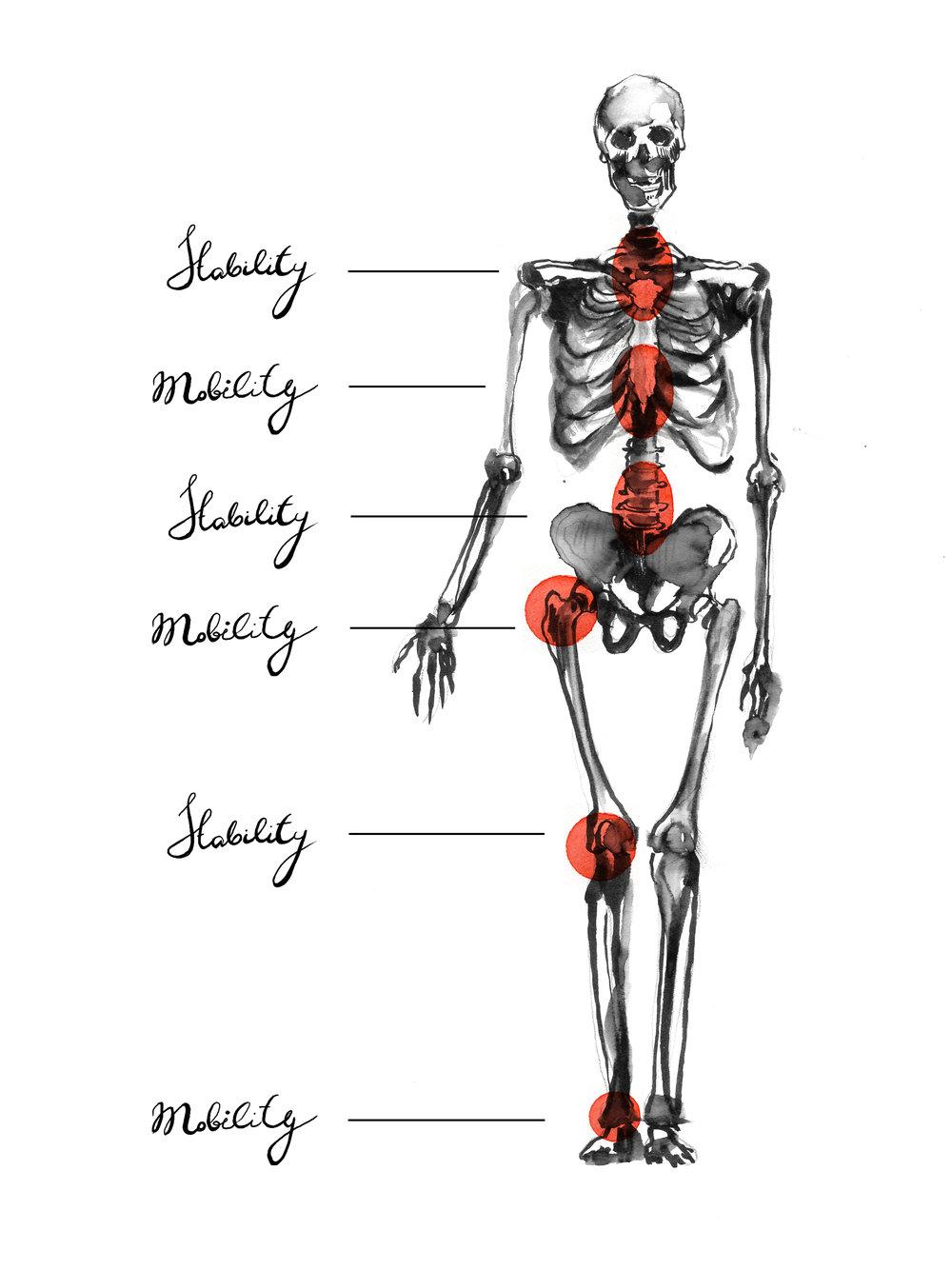 Skeleton fin.jpg