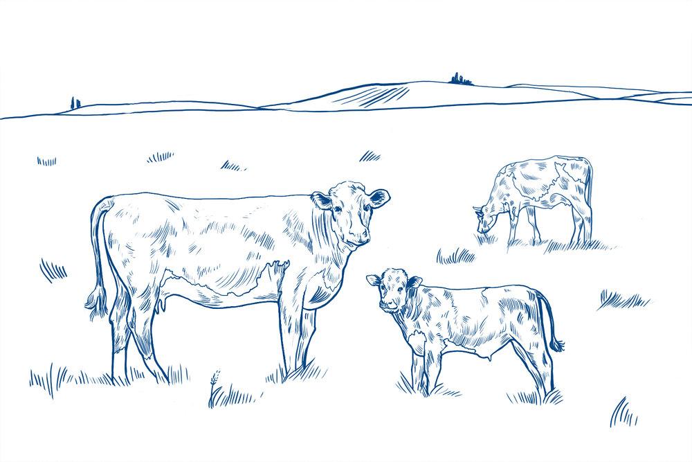 pasture-and-range-v2.jpg