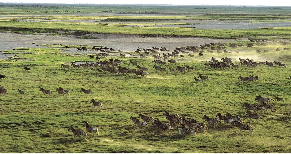 Witness the largest zebra migration on the planet, aptly named the Serengeti of the South; the Makgadikgadi Salt Pans.
