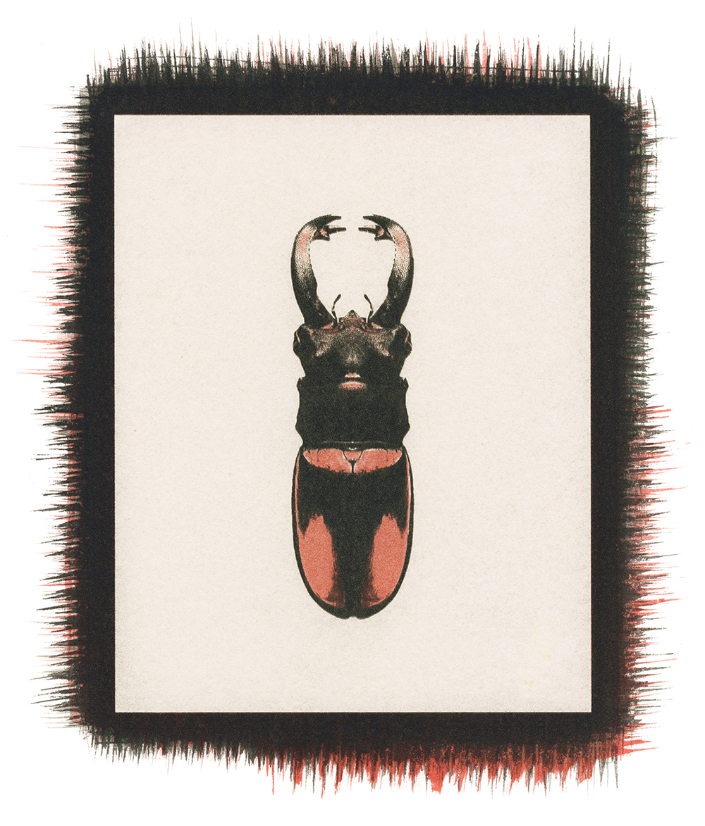 Beetle No.3.jpg