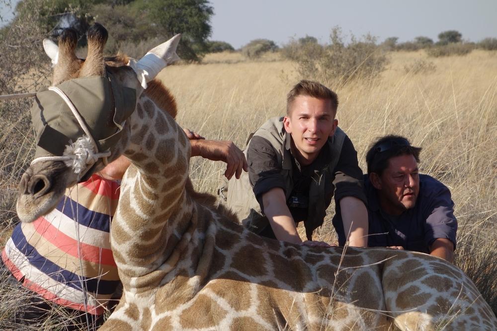 Eric Mayer bei ZDF Dreharbeiten. Eine Giraffenumsiedlung in Namibia.