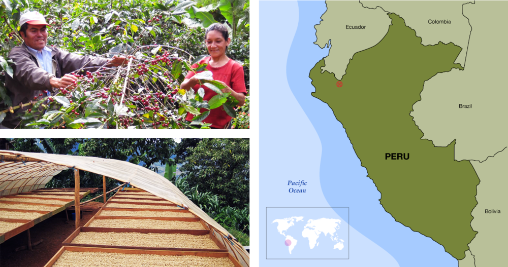 fair trade practices and coffee bean sourcing
