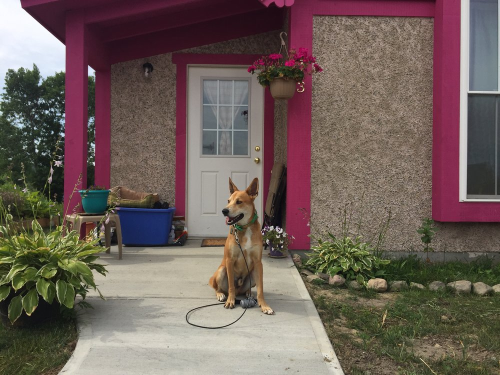 This is Alfie, posing in front of pink x pebble tiny houses at Boiceville Cottages.