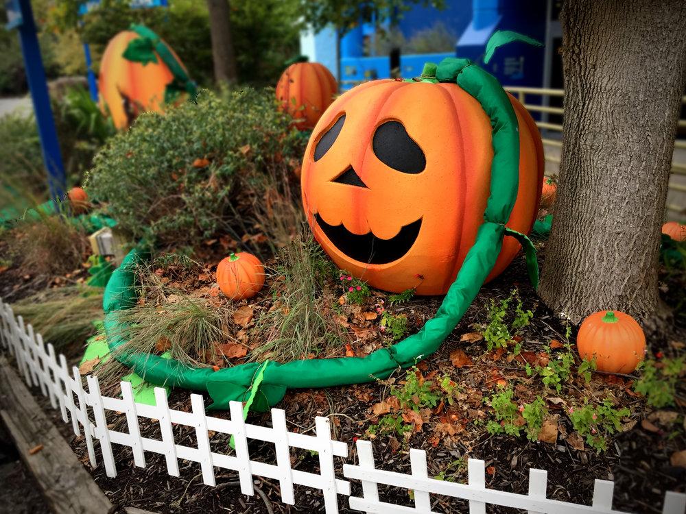 Zoo_Pumpkin