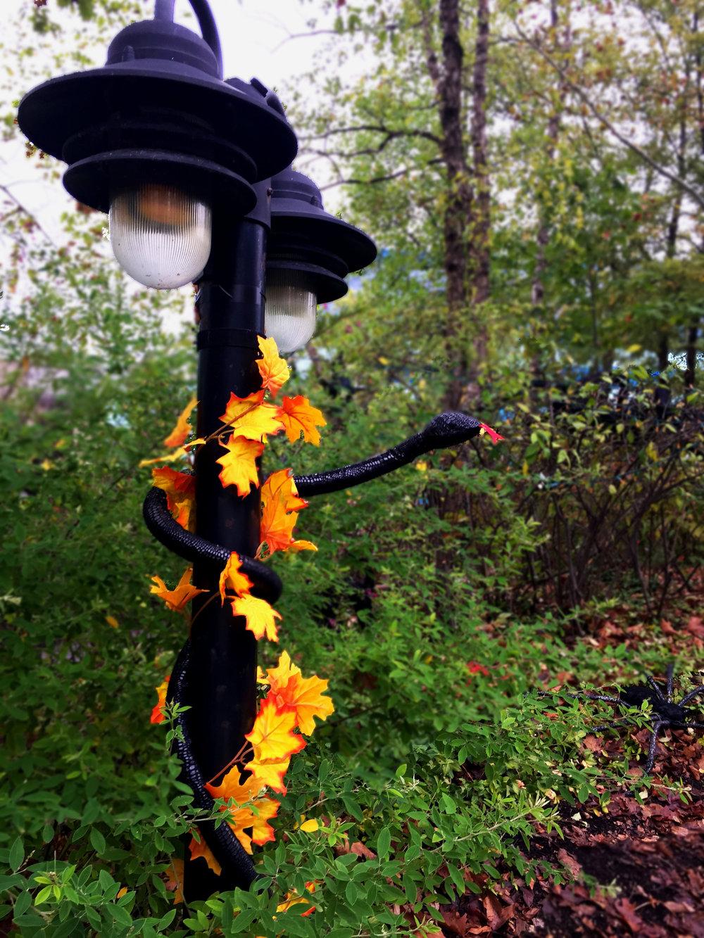 Indianapolis_Zoo_ZoBoo_lampsnake