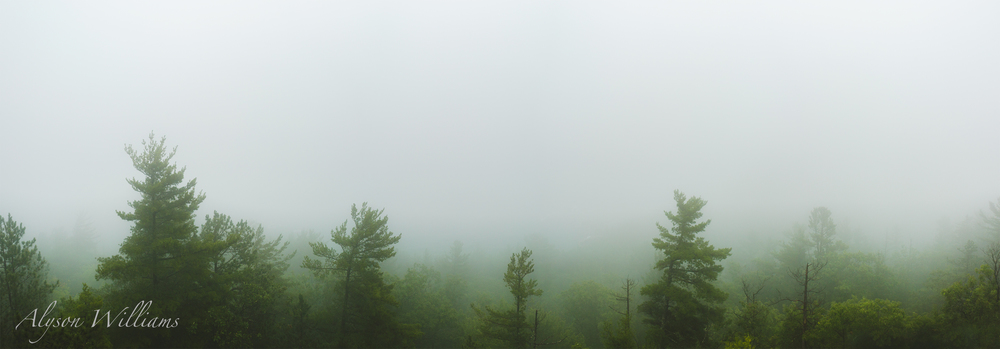 Foggyforestpano.jpg