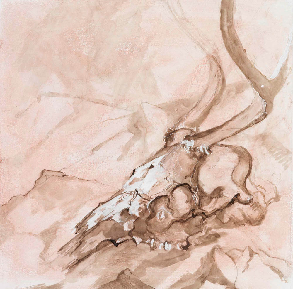 Deer Skull, Study #49
