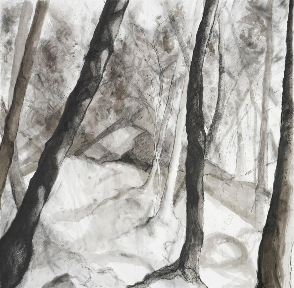 Woods Interior, Study #39