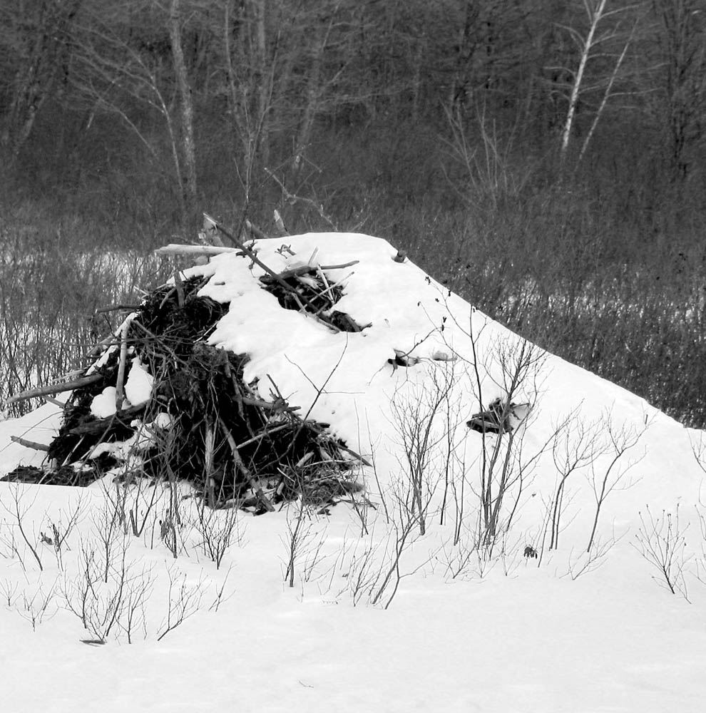 Beaver Hut, Winter.jpg