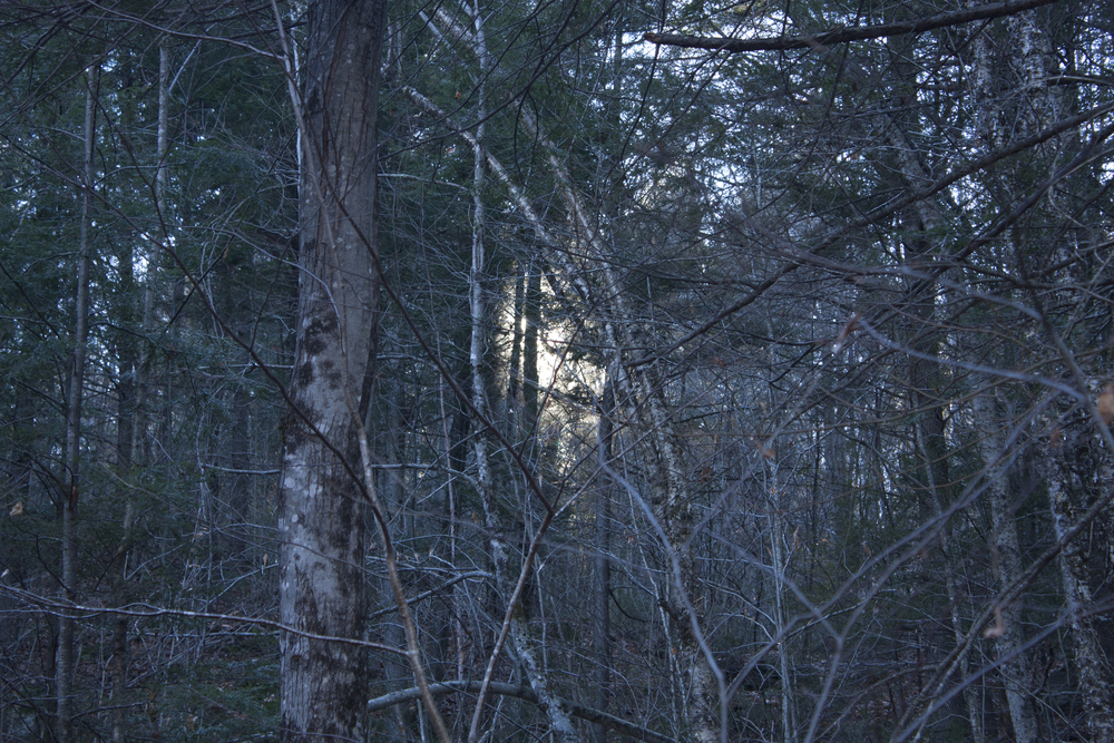 Light in the Woods, #2