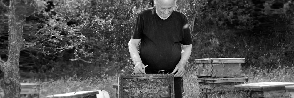 Dimitirs Novakidis inspects his beehives