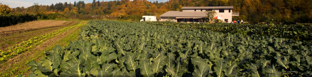 A photo from some of the nonprofit's farm. Courtesy of Oxbow Farm & Conservation Center.