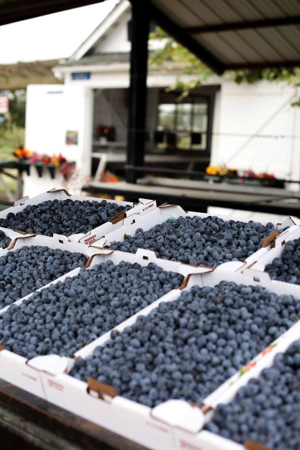 A look at some of Hedlin's freshly picked blueberries.