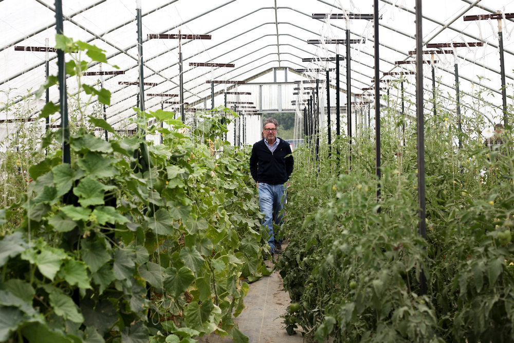 John Gunnar, one of Portage Bay's owners, strolls through one of Hedlin's Family Farm's greenhouses.