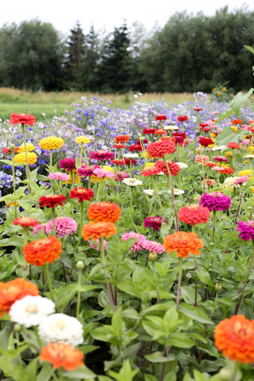 Like Hedlin's, Viva featured eye-catching flowers.