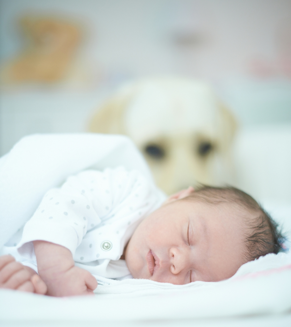 how-to-introduce-pets-to-new-baby.jpg