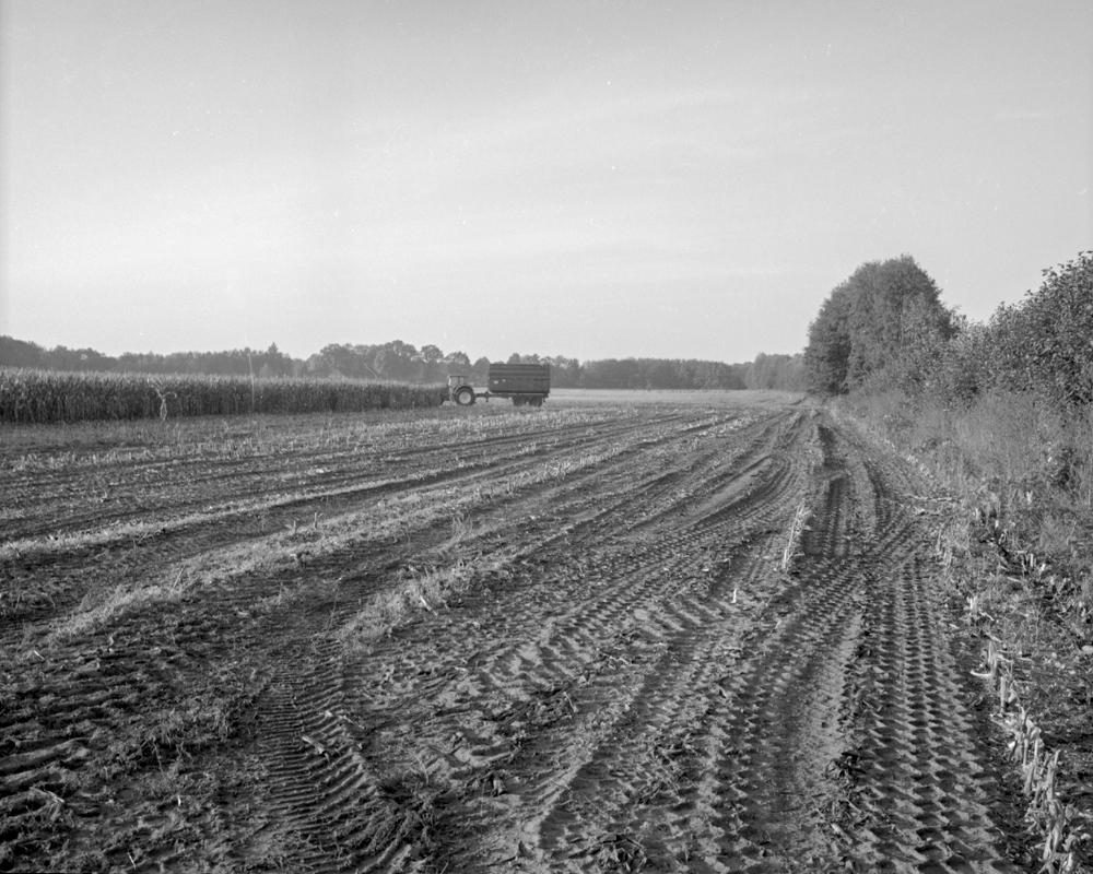Farm 2011 - 032b.jpg