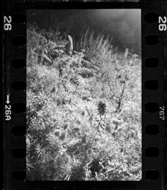 Leica028.jpg