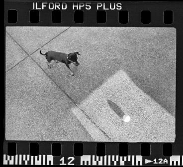 Leica054.jpg
