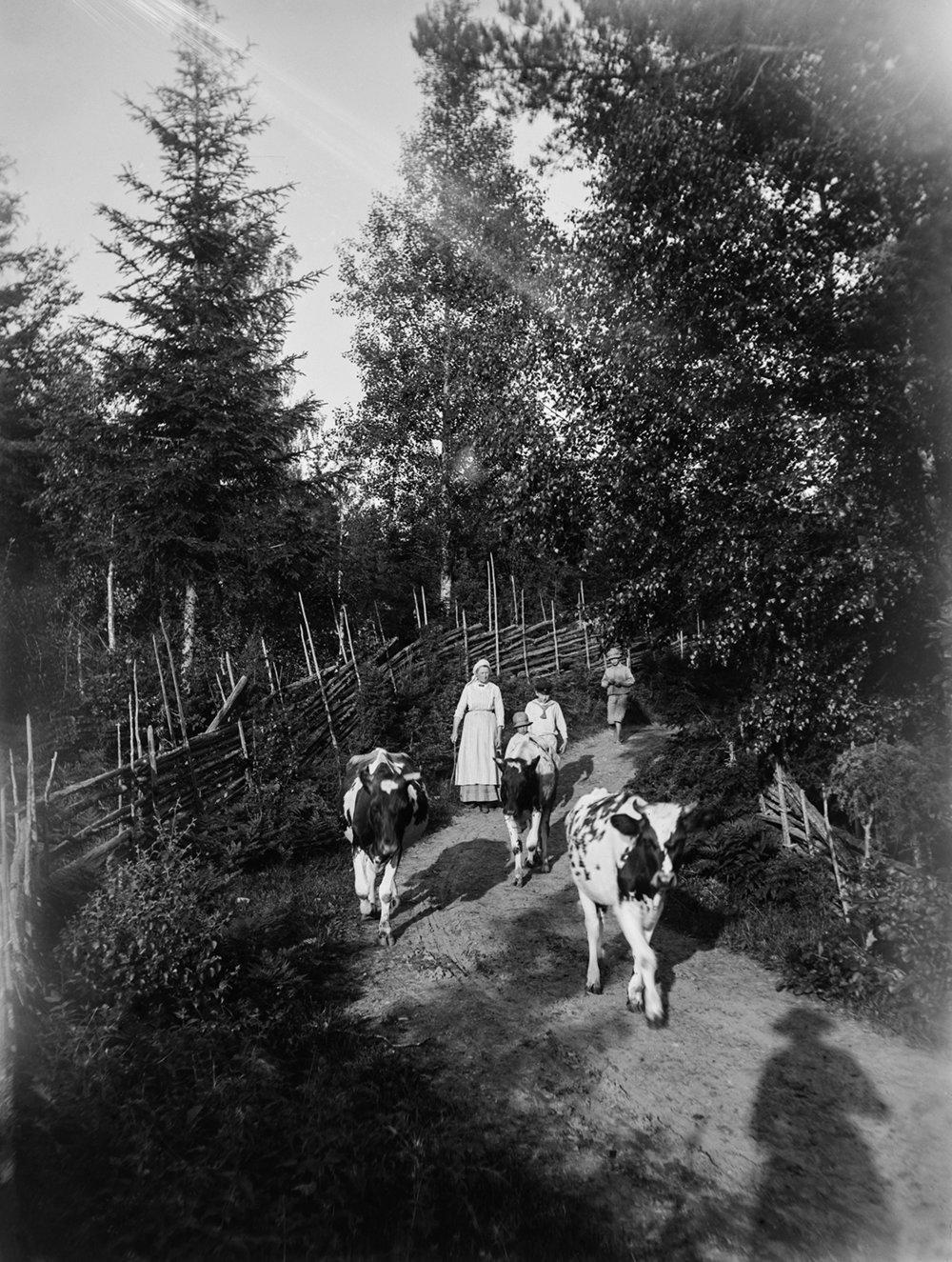 Sweden_0035Bsharp.jpg
