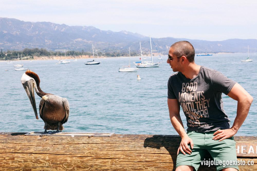 Pelícano en el muelle de Santa Bárbara