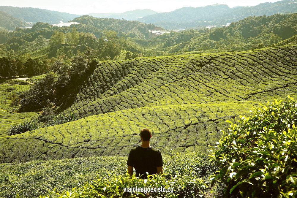 Plantaciones de te en Cameron Highlands