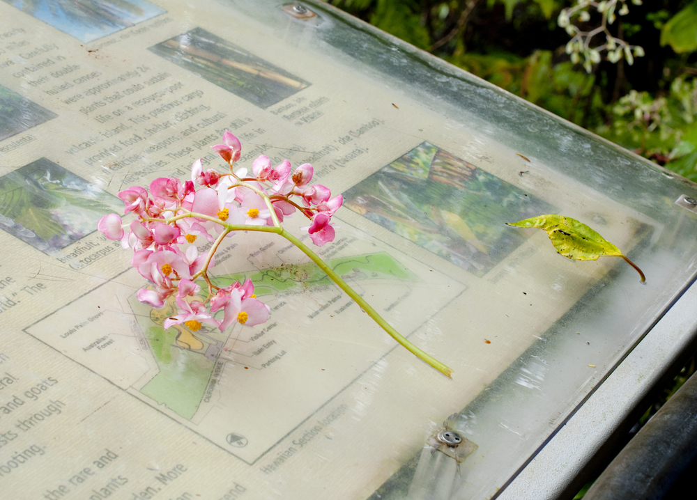 "Botanical Gardens    Archival Pigment Print, 27.5"" x 19.75""  2013"