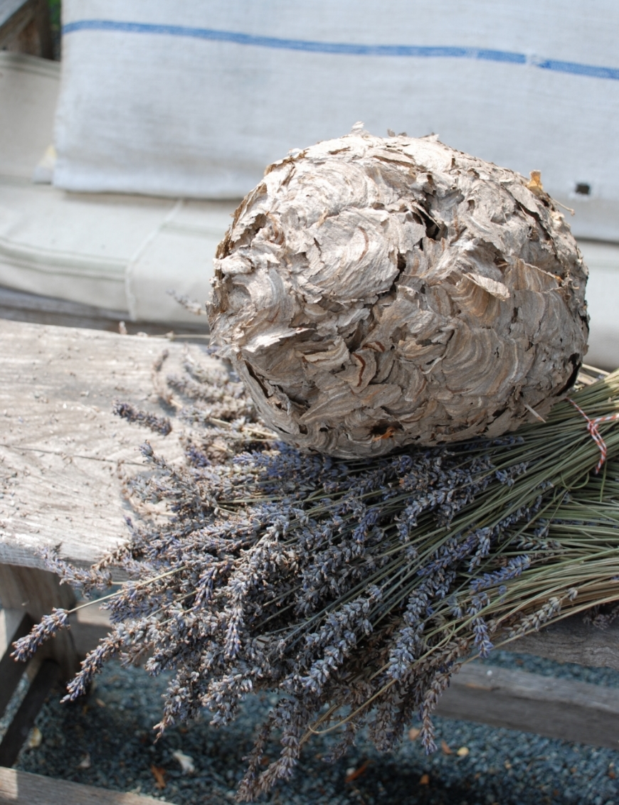 Wasp nest artfully layered on freshly-cut lavender