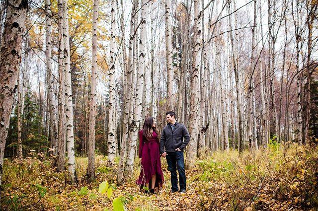 I love birch trees!