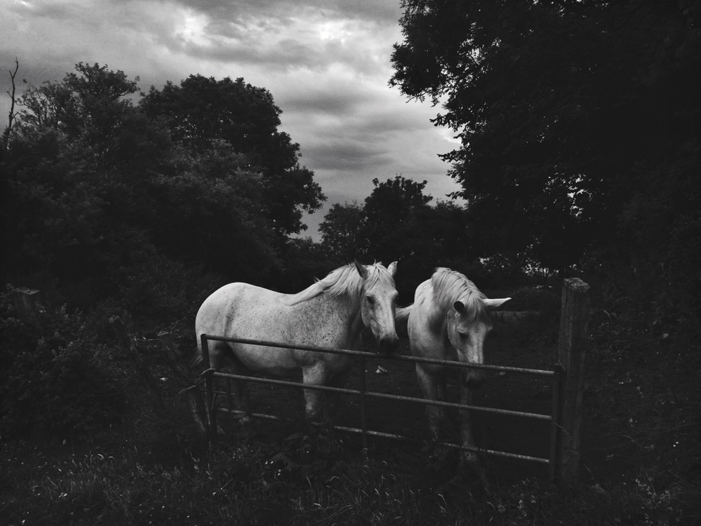 Horses in Normandy. Shot on iPhone.