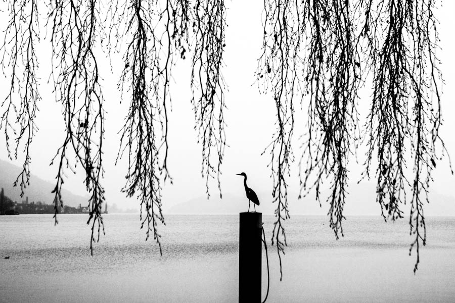 Heron, Switzerland.