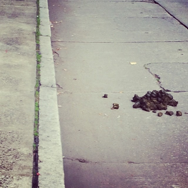 Why don't the #seattle horseback policeman have to stop and pick up droppings like we do with our pets?