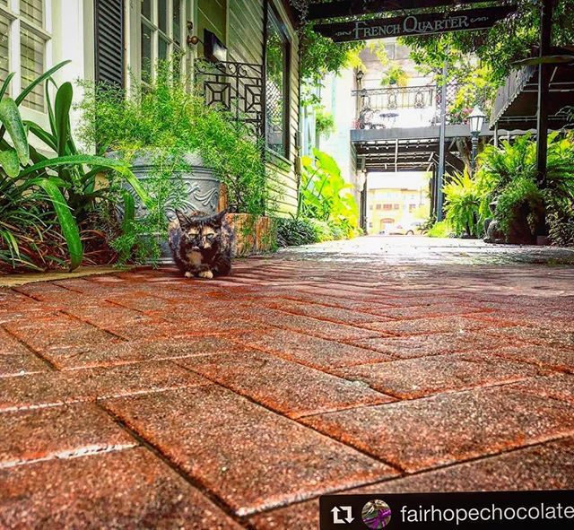 Bonjour from Marble le chat! Rainy day at the beach? Come dine, relax and shop in the Fairhope French Quarter!  via @fairhopechocolate  #frenchquarter #fairhope #marble #marblelechat #cat #tabbycat #alabama #gulfcoast #gulfshores #orangebeach #mobilealabama #mobilebay #dine #shop #relax #rainyday